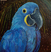 Sylvia Roth - Blue Parrot